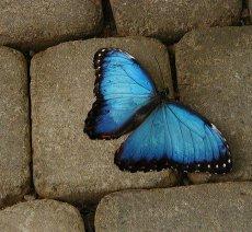 Şans, Kader, Özgür İrade ve Zaman(3)Şans, Kader, Özgür İrade ve Zaman(3)