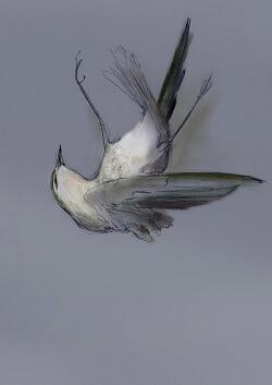albert-camus-dusus-54 Düşüş / Albert Camus