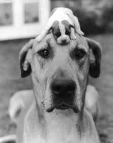 Bir Köpeğin Araştırmaları / Franz Kafka