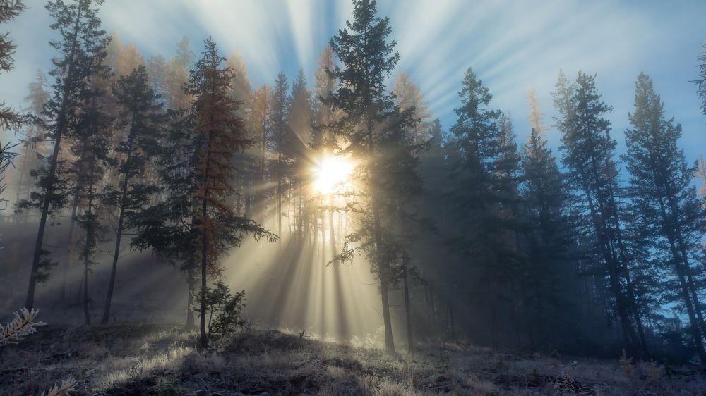 Yola Işık Düşünce