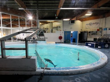 SOS-Station für Schweinswale (Foto: Rüdiger Hengl)
