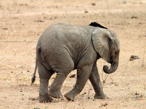 Auch Elefanten erkennen sich im Spiegel. (Foto: Rüdiger Hengl)