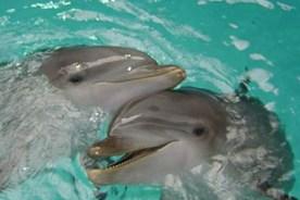 Delfien berühren sich gerne. (Foto: Verena Pecsy)