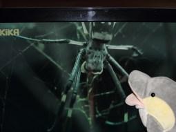 Die Spinne sieht ganz schön gruselig aus. (Foto: Rüdiger Hengl)
