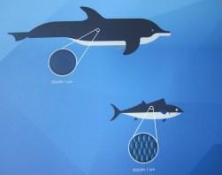 Unterschiede der Haut (Informationstafel im Aquarium Genua)