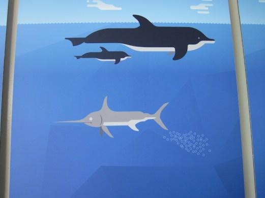 Vergleich Fisch - Delfin