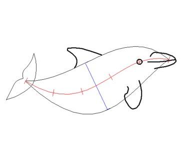 5. Schritt: Die Schnauze des Delfins (Zeichnung: Rüdiger Hengl)