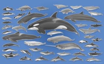 Alle Delfine auf einen Blick (Illustration: Jörg Mazur)