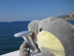 Auf der Suche nach Delfinen (Foto: Susanne Gugeler)