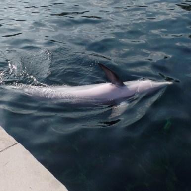 Hier schwimmt Namis Mutter Sunny (Foto: Oliver Schmid)