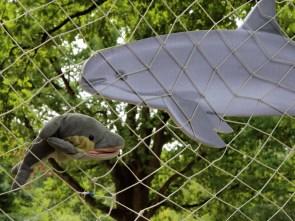 FINN und ein Modell von einem Vaquita (Foto: Rüdiger Hengl)