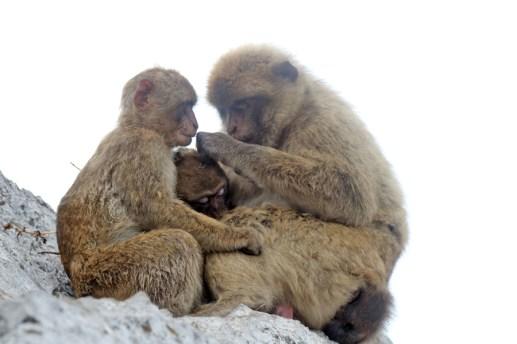 Auf dem Affenfelsen in Gibraltar (Foto: Rüdiger Hengl)