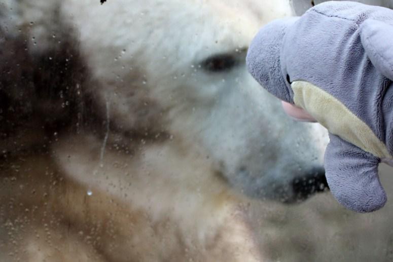 FINN mit Eisbär (Foto: Rüdiger Hengl)