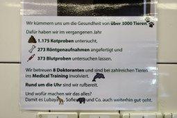 Beim Tierarzt (Foto: Rüdiger Hengl)