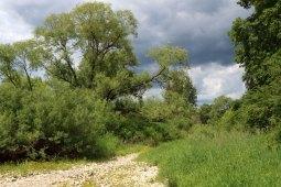 Trockenes Flussbett der Donau (Foto: Rüdiger Hengl)