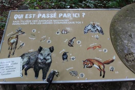 Tierspuren-Auflösung (Foto: Rüdiger Hengl)
