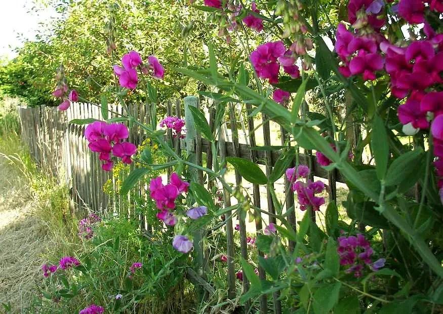 Image Result For Letter Garden