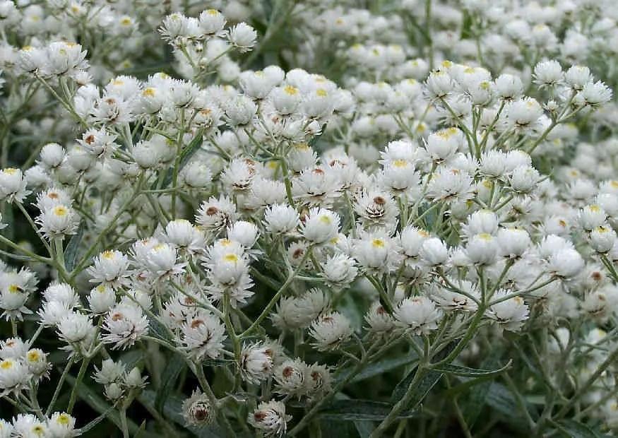 August  Was blht im Blumengarten  Bltezeit Hochsommer