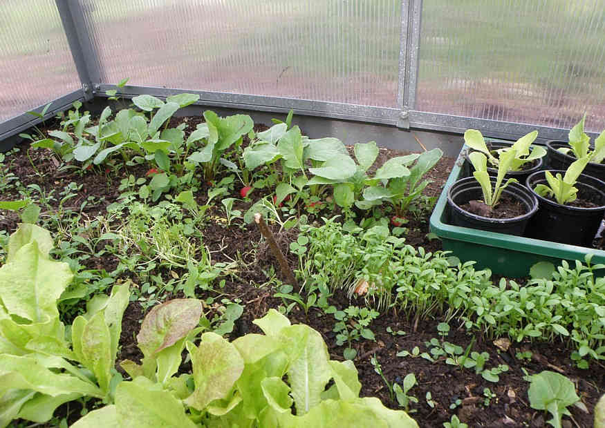 Februar Saat Und Pflanzkalender Gartenkalender Für Aussaat