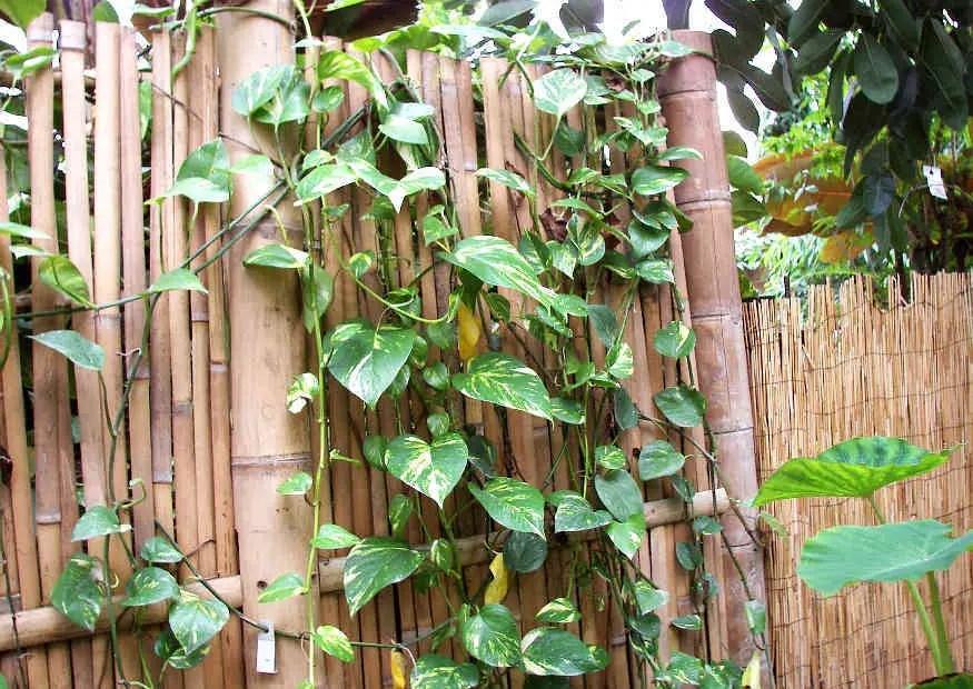Sichtschutz Aus Bambus Selber Bauen Bambusrohr Und