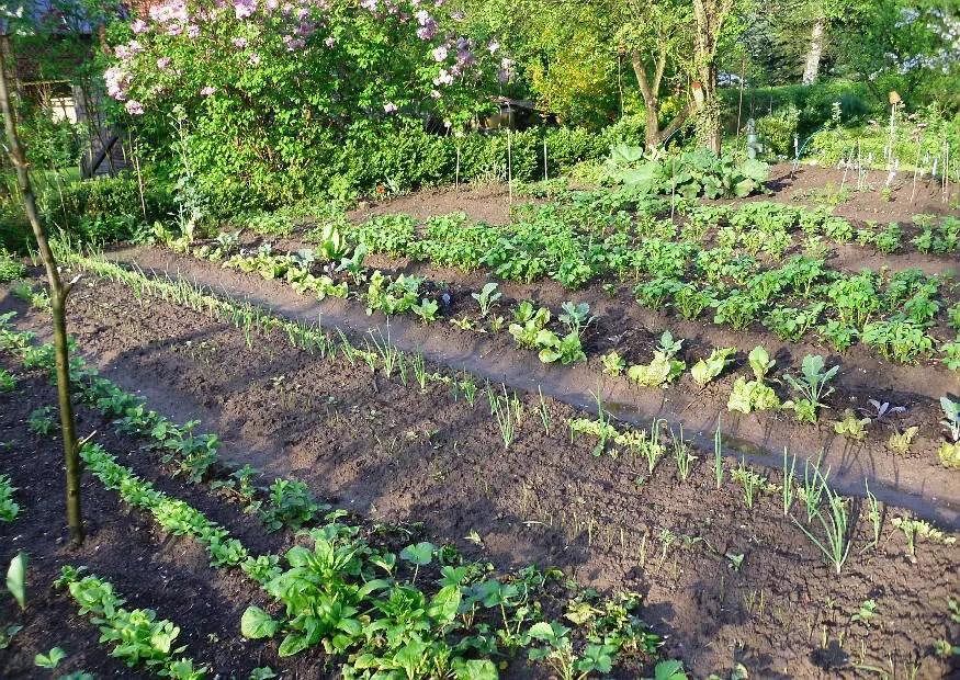Konkreter Gemüse Anbauplan Skizze Der Beetaufteilung