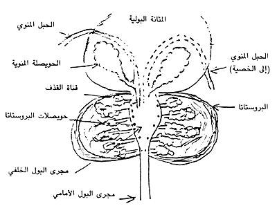 https://i0.wp.com/www.dermatologyinfo.net/arabic/images/photo2b.jpg