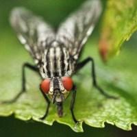 PIQURE DE TAON : symptomes, que faire en cas de piqures de tan ?