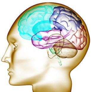 Effets de la nicotine sur l'organisme, le cerveau et la santé