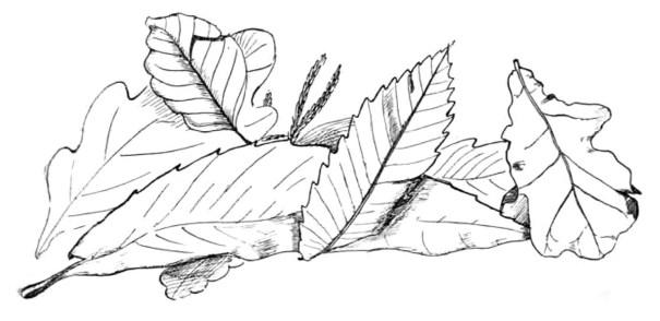 tekening herfstbladeren