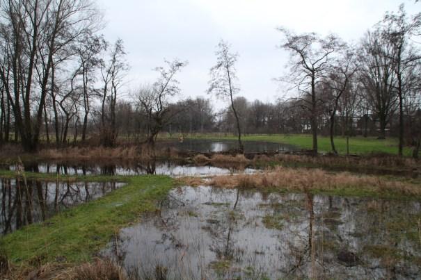 wandelpaden door het moeras