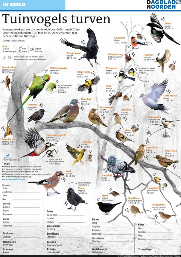 tuinvogels turven poster