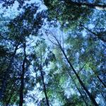 meer licht in bosjes