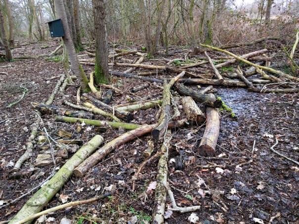 bosbodem met dood hout elzenbosje