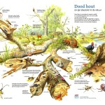 poster dood hout