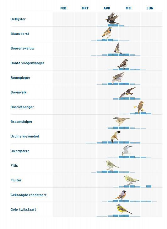 fenologie vogels1