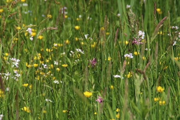 kruidenrijke graslandjes