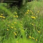 KLein streepzaad tussen het gras