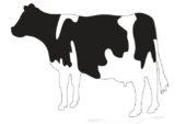 Wie krijgen dit jaar de Eemnesser Koeien Trofee en het Eemnesser Koetje?