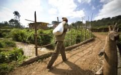 caffè limu - coltivazione in etiopia