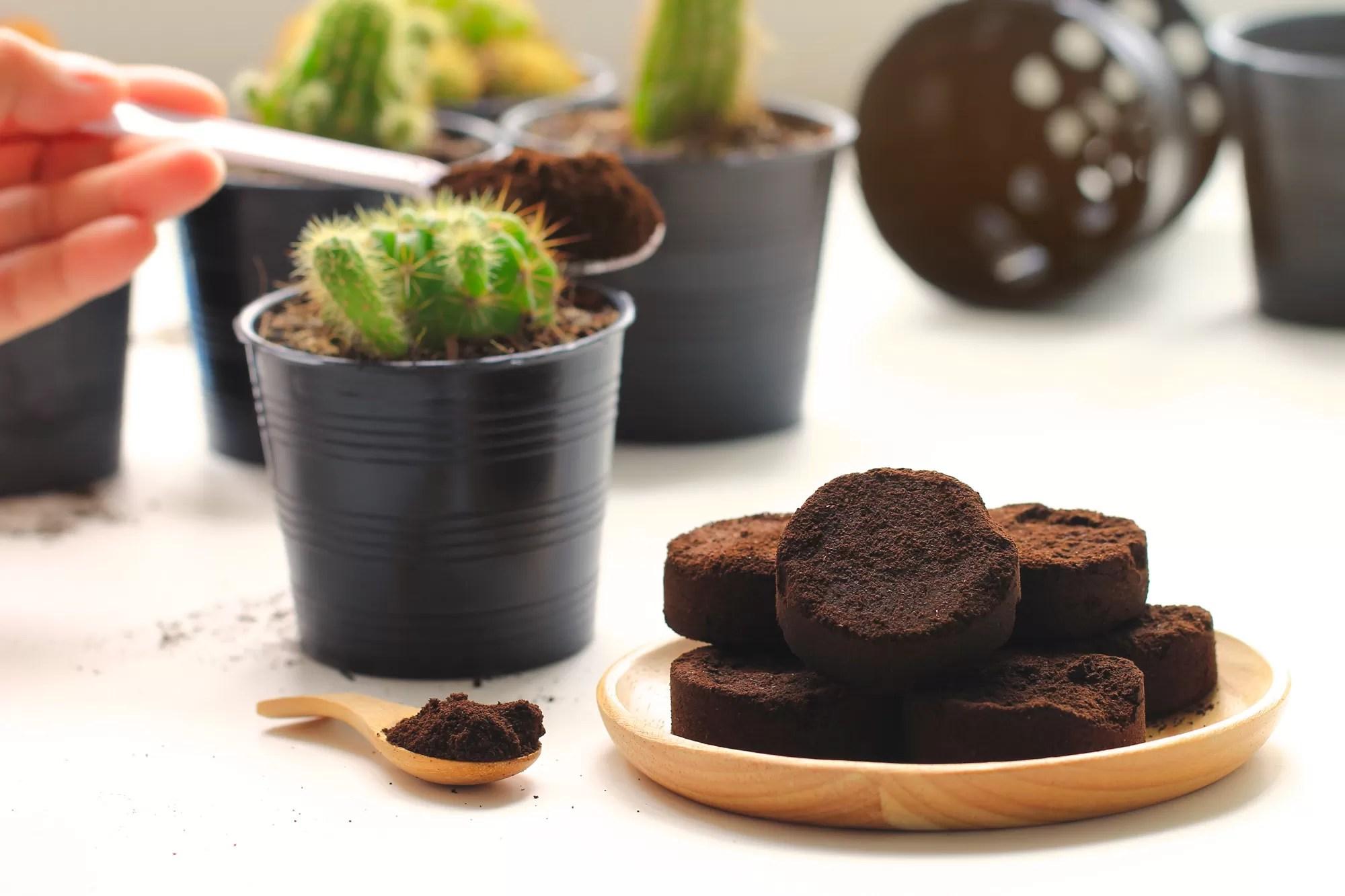 fondi caffè giardino: come utilizzarli come concime per piante da appartamento