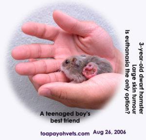 tumor dwerghamster hamster