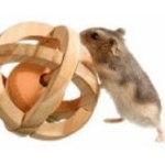 hamster speelgoed
