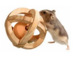 hamsterspeeltjes
