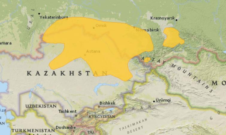 russische dwerghamster leefgebied
