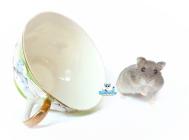 nest-z6-russische-dwerghamster-hamster