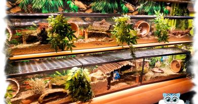 hamsterkamer