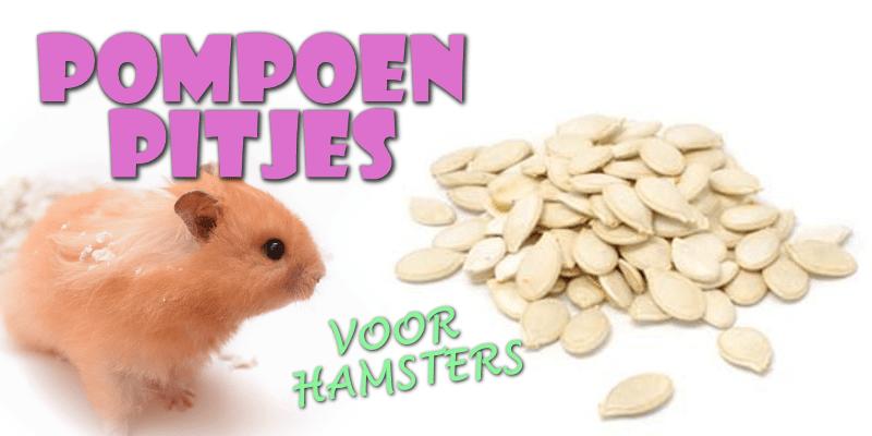 pompoenpitten voor hamsters