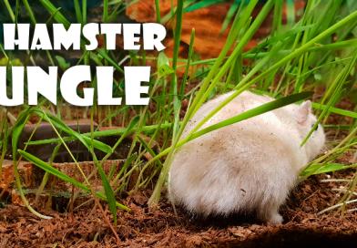 De Hamster Jungle!