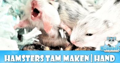 baby hamster tam maken