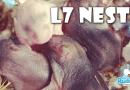 L7 Dwerghamster nestje